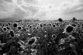 Fano,Italy,July 2012